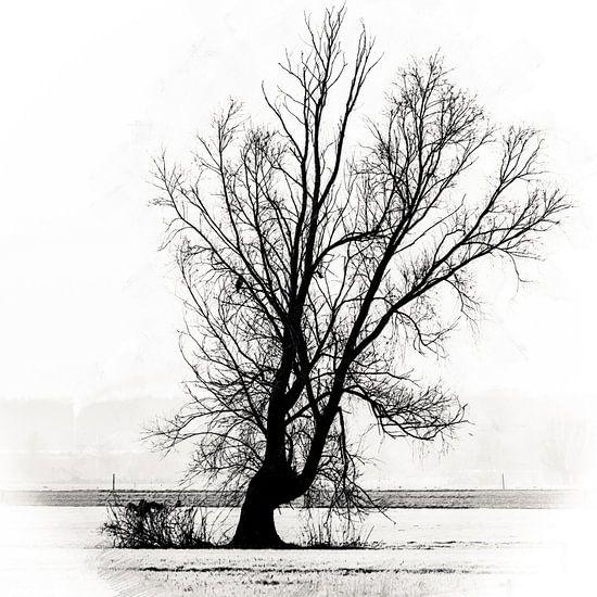Het leven en de dood in een eenzame boom