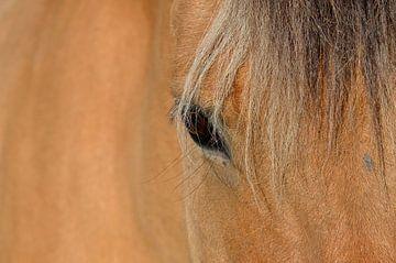 Oog van een paard von Gerda Beekers