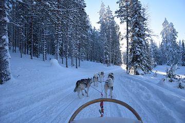 Huskies von Jeroen Franssen