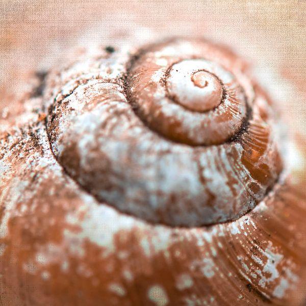 Spiraal van een slakkenhuis