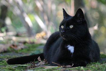 Schwarze Katze von ines meyer