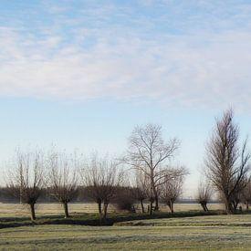 Nachtvorst in de polder van Yvonne Blokland