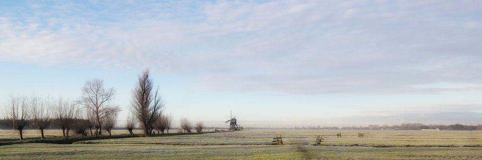 Nachtvorst in de polder