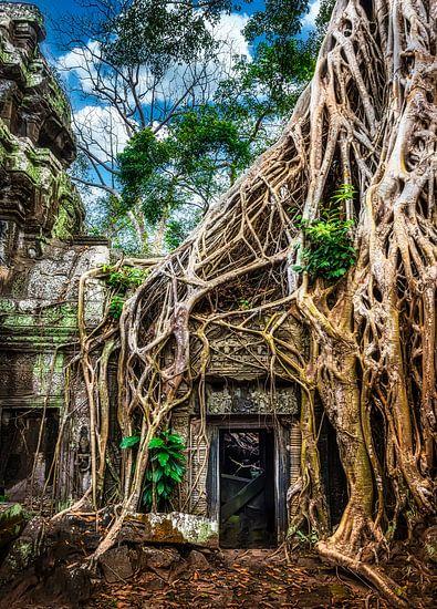 Tomb raider, Ta Prohm tempel, Cambodja