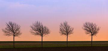 4 op een rij, Breebaartpolder, Groningen, Nederland van Henk Meijer Photography