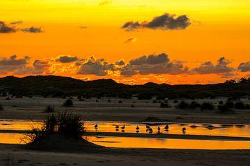 Möwen beim Sonnenuntergang auf Amrum van Alexander Wolff