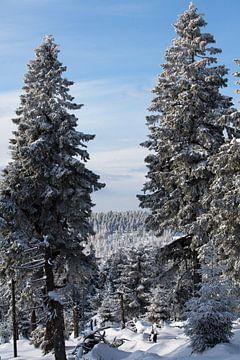 Winterlandschap bij de Brocken in het Harzgebergte van t.ART
