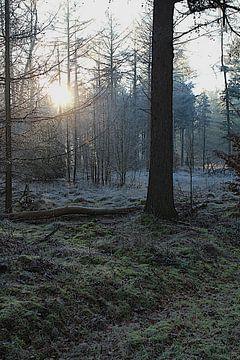 Der erste Sonnenstrahl von Photographico Magnifico