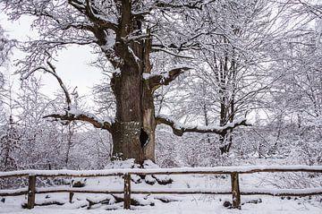 Winter an der alten Kamineiche
