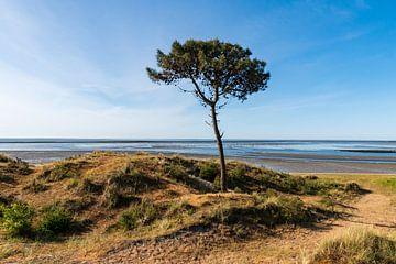 boom op terschelling van Merijn Loch