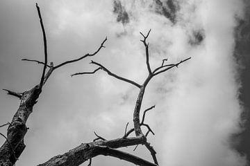 Baumskelett in Schwarzweiß vor wolkenverhangenem Himmel von Fartifos