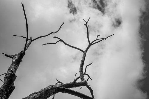 Baumskelett in Schwarzweiß vor wolkenverhangenem Himmel