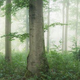Panorama de la forêt sur Tobias Luxberg