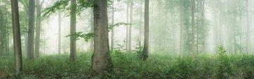 Wald Panorama von Tobias Luxberg