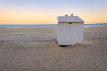 Cabine de plage avec mouettes sur Johan Vanbockryck