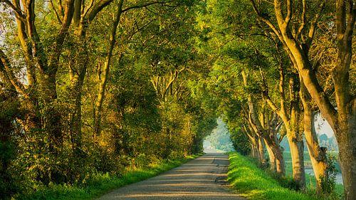 Landweg in ochtendlicht van