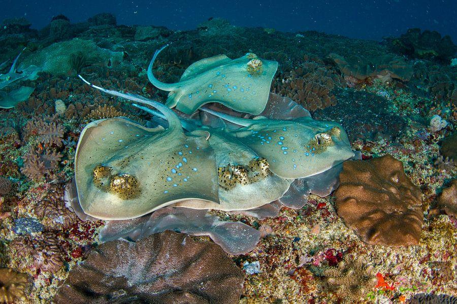 Roggen op de bodem van de zee