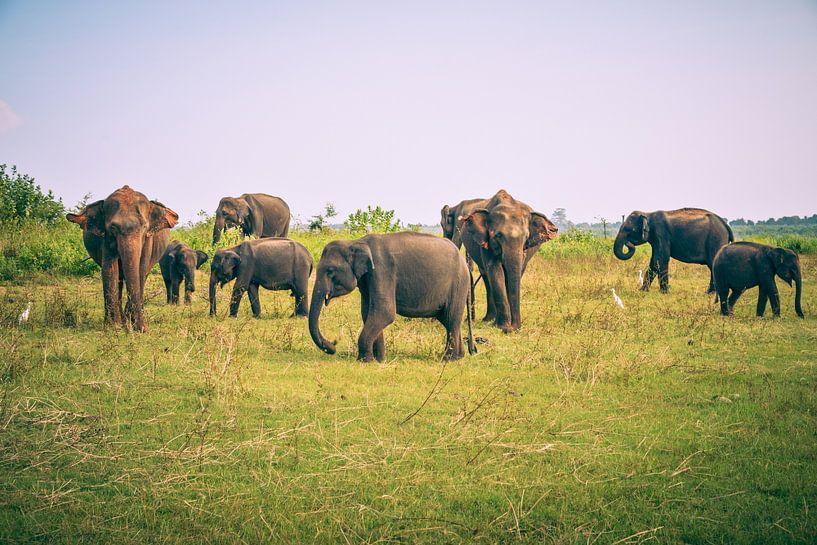 Olifanten op Sri Lanka van Jille Zuidema