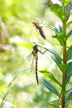 Besiedelte Libelle von TOUCH Fotografie