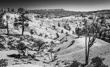 Bryce Canyon in schwarz und weiß