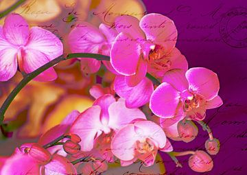Rose orchidée ! sur christine b-b müller