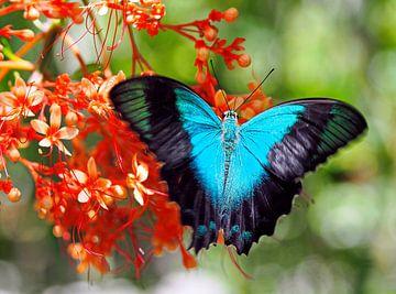 Blau auf Rot von Eduard Lamping