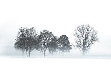 NEBLIGER BEGINN EINES WINTERTAGES von Algon Photography