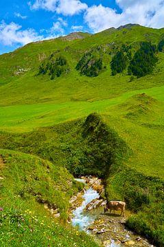 Fane Alm au Tyrol du Sud, Malga Fanes sur