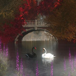Dierenrijk – Zwart en witte zwanen