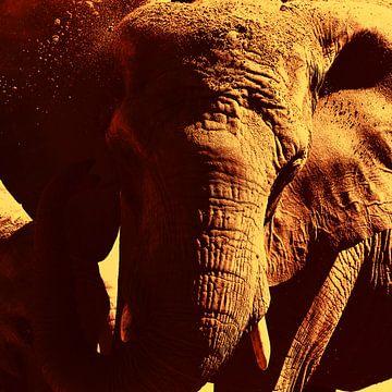 Elefant von Stefan Mosert