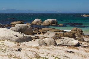 Boulders Pinguins in Zuid Afrika van