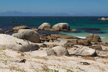 Boulders Pinguins in Zuid Afrika van Thea.Photo