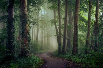 Over het slingerende pad von Edwin Mooijaart