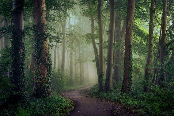 Over het slingerende pad van Edwin Mooijaart