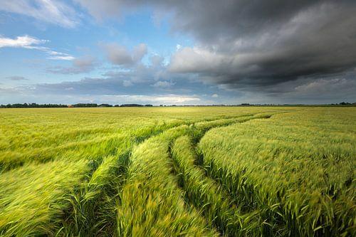 Donkere wolken drijven over de graanvelden in het Hoge Land van Groningen tijdens een warme zomeravo