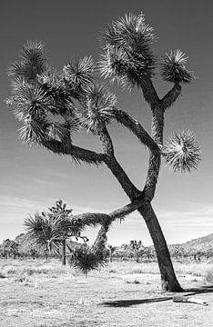 Joshua Tree National Park zwart wit van Discover Dutch Nature