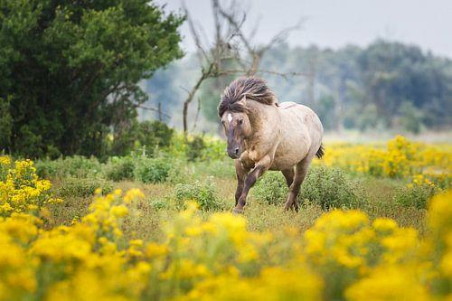 galopperend paard van Pim Leijen