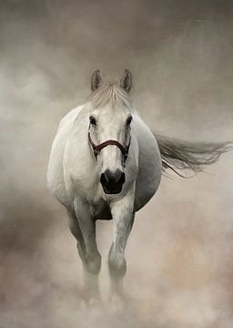 Weißes Pferd im Nebel von Diana van Tankeren