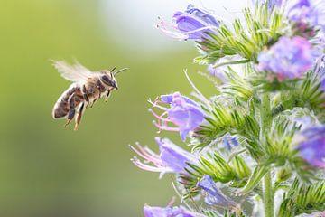 Bijen in aanpak van Dennis Eckert