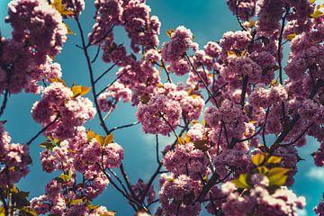 Bloesems roze 02 van FotoDennis.com