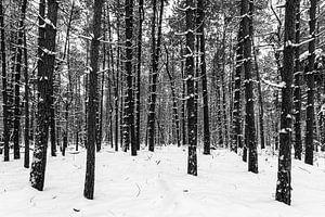 Winters bos 1 van Albert Mendelewski
