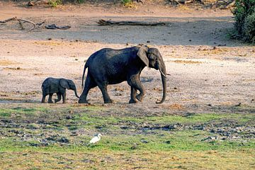 Elefantenmutter mit kleinem Elefanten von Merijn Loch
