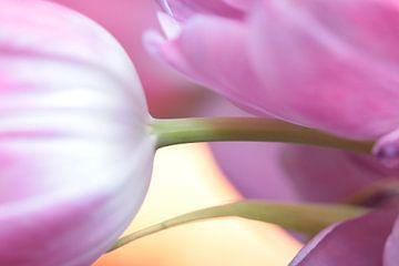 Tulpenimpression von Augenblicke im Bild