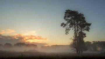 Boom in de mist van Lex Schulte