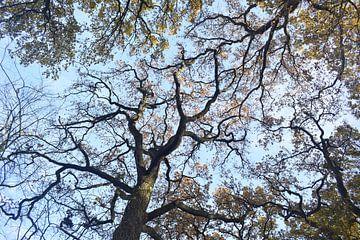 Bomen in het Land van Ooit aan het begin van de lente. van Monique Pulles