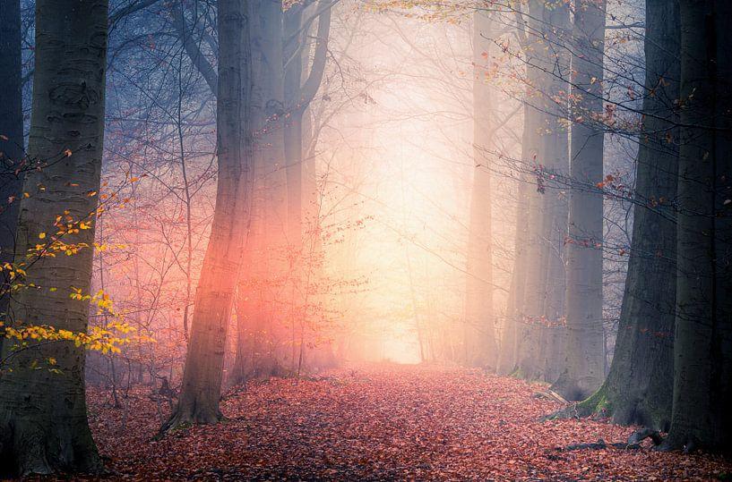 The mist is on fire van Wim van D