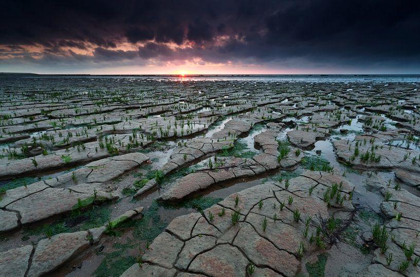 Earth and water van Olha Rohulya