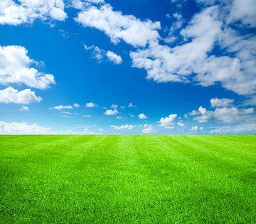 Grünes Gras von BVpix