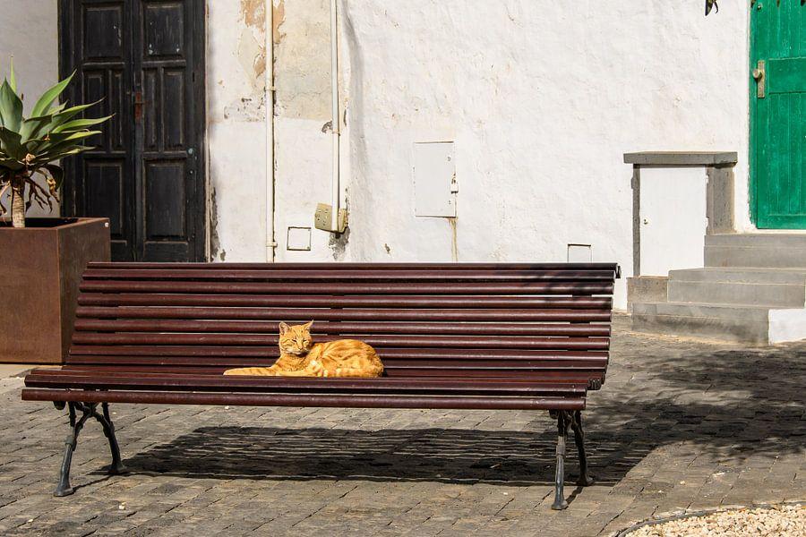 relaxing cat van Heinz Grates
