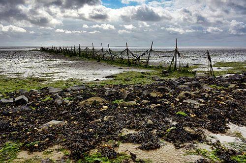 Vissers fuik aan waddenzee dijk